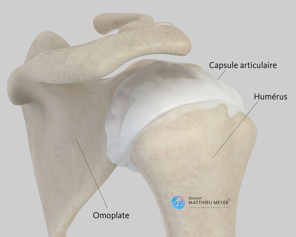 Épaule normale (vue postérieure)